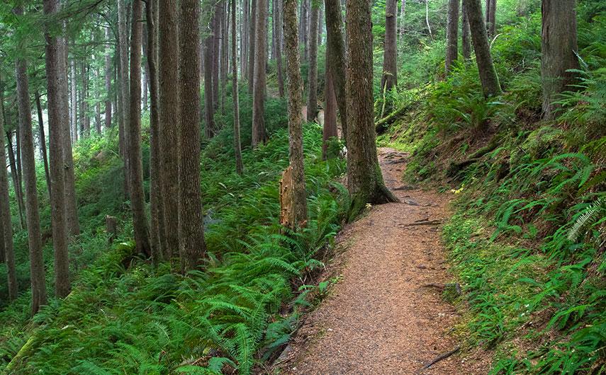 Oregon Coast Forests