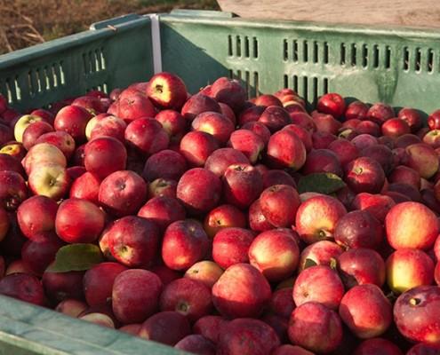 Wandering Aengus' harvest | COURTESY OF WANDERING AENGUS